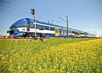 Blue train in field with yellow flowers
